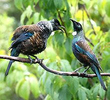 Tui - When I've been out with the boys I expect my meal to be ready when I get home......! by Roy  Massicks