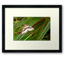 Pointed arrow! - Moth - NZ - Southland Framed Print