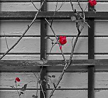 Wallflowers by Jon  Johnson
