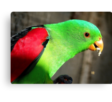 I am a true beauty! - Red Wing Parrot - NZ - Gore Canvas Print