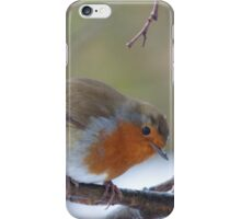 Robin in the Winter iPhone Case/Skin