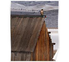 Rooftop Raptor Poster