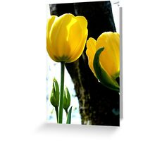 Standing tall! - Yellow Tulips - NZ - Gore - Southland Greeting Card