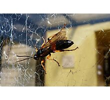 Wizzy Wasp! - NZ - Southland Photographic Print