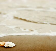 Shells on the beach by ctsang