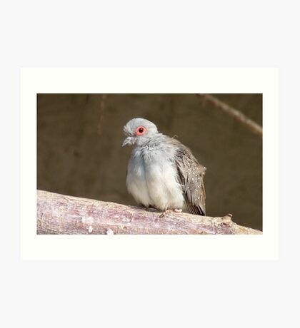 I am not the Ugly Duckling - Diamond Dove - NZ - Southland Art Print
