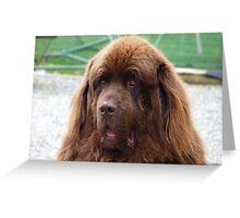 I know you can't help but love me! - Big Dog - NZ Greeting Card