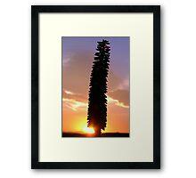 Good Morning Aloe Glory. Framed Print