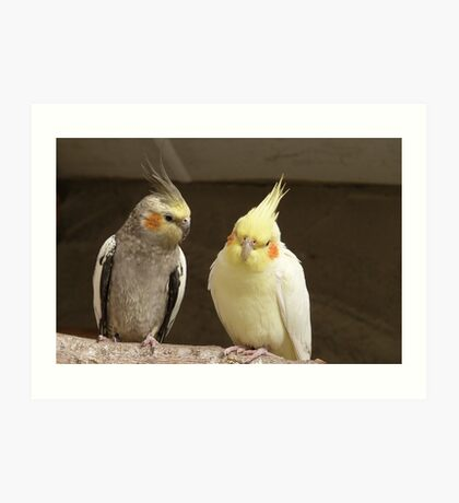 Friends catching up! - Cockatiels - NZ - Southland Art Print