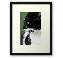 I'm not looking! - Cat - NZ - Southland Framed Print