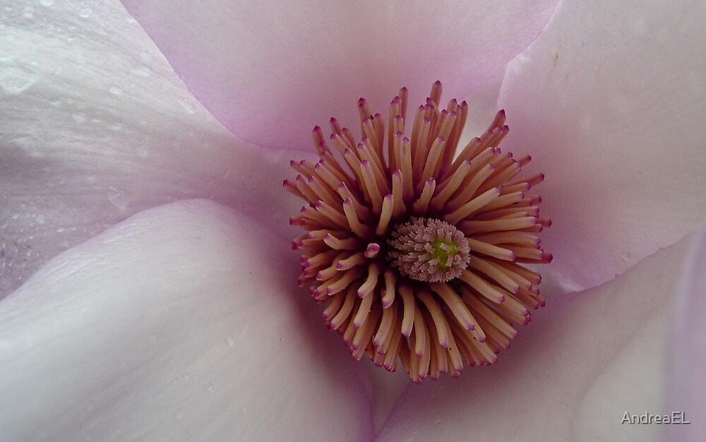 Finding Nemo! - Magnolia Heart - NZ by AndreaEL