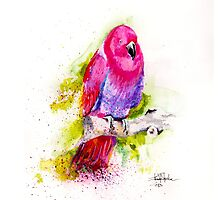 Eclectus Parrot by IsabelSalvador
