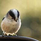 Long-tailed Tit by Taka