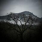 Bear Mountain Tree Silouette by Billie Bullock