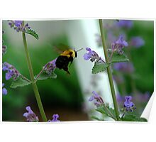 BEES RUSH IN Poster