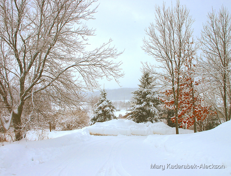 Winter Snow Scene by Mary Kaderabek-Aleckson