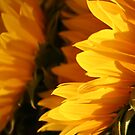 Beaming Sunflowers by Terri~Lynn Bealle
