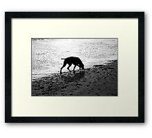 Beach Dog Framed Print