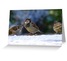 Thank you for the seed! - House Sparrow - NZ - Southland Greeting Card