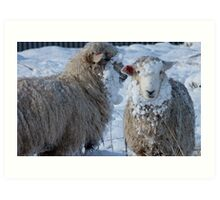 We got Hats & Scarves to match the Snow! - Sheep - NZ - Southland Art Print