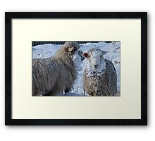 We got Hats & Scarves to match the Snow! - Sheep - NZ - Southland Framed Print