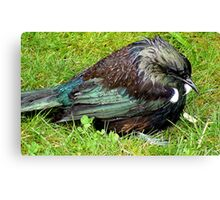 Boy I'm Drenched! - Tui - New  Zealand  Canvas Print