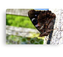 Taking a break! - Red Admiral Butterfly - NZ - Southland Canvas Print