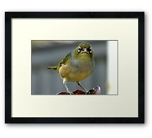 This is what I think of you! - Silvereye - NZ - Southland Framed Print