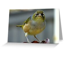 This is what I think of you! - Silvereye - NZ - Southland Greeting Card