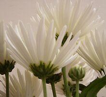 White Flurs by CrazyDimension