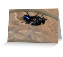 Upside down - Blue bottle Fly - NZ - Southland Greeting Card