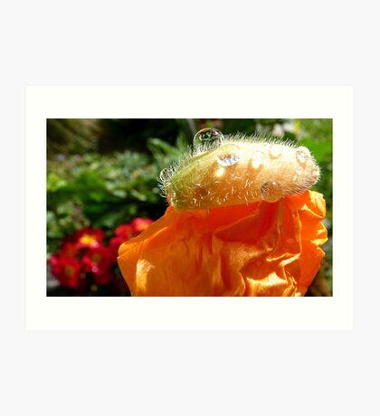 The Shower Cap - Orange Poppy - NZ - Southland Art Print