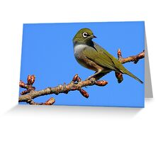Never Look Back!!! - Silvereye - NZ - Southland Greeting Card