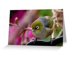 Are you Back again with the camera? - Silvereye - NZ Greeting Card