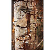 Cracking tree bark Photographic Print