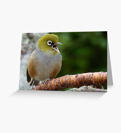 Are you LISTENING!! - Silvereye - NZ - Soutland Greeting Card