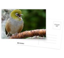 Are you LISTENING!! - Silvereye - NZ - Soutland Postcards