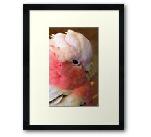 Breast Cancer Awareness Month! - Gallah - NZ Framed Print