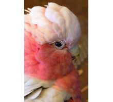 Breast Cancer Awareness Month! - Gallah - NZ Photographic Print