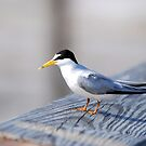 Flatfoots are Terns by Franklin Lindsey