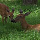 Mommy & Baby Deer by wayatsagi