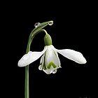 Diamond Flower by David Meacham
