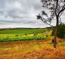 She Oak & Vines by smylie