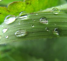 WATER DROPS GRASS H2O DEW by SofiaYoushi