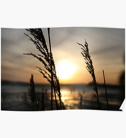 sunset grass Poster
