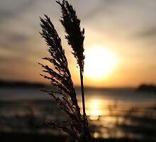sunset grass II by dawid