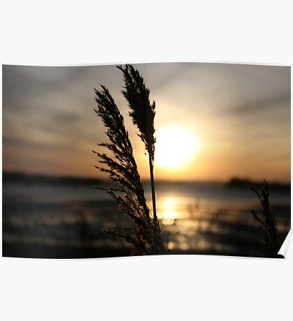 sunset grass II Poster