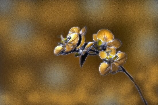 Orchids by Kimberly Palmer