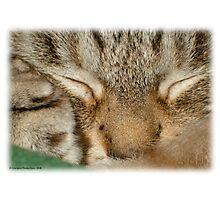 Sleepy Kitty Photographic Print