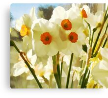 Spring's First Daffodils Canvas Print